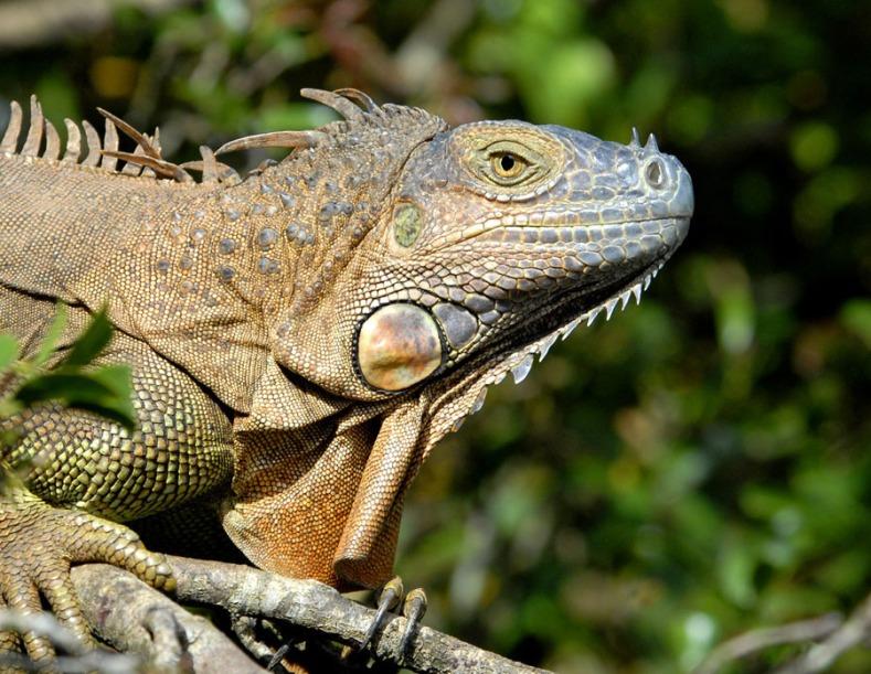 Kostaryka - fauna i flora (8)
